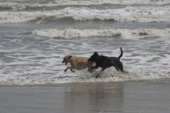 Tico and Sasha at the beach