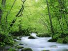 nature-summer-wallpaper-22.jpg