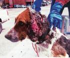 A young boys' dog attacked by feral dogs
