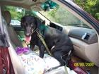 Mandy on her way to her new home and  a great new life! :))