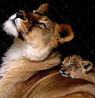 mom and baby tiger.jpg