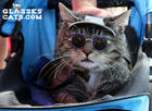 Kitty In Shades