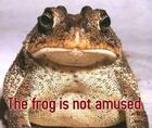 The Frog is Not Amused!