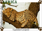 leopard-sleeping-in-tree.jpg