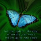 Blue Amazon Butterfly with text