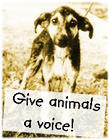 Animal_rights_V___stock_by_MinxKitten.jpg