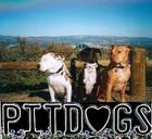 Tilly Jenny and Watson in little park off Old Topanga overlooking valley.jpg