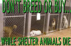 dontbreed-shelterrow-1.jpg