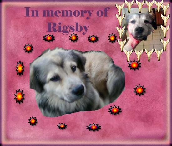 In memory of Rigsby
