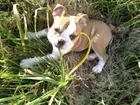 Pixie in the grass