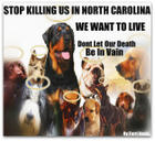 "NC Animal ""Shelters"""