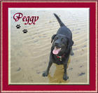 In Loving Memory of Peggy.