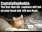 funny-pictures-cat-fears-captions.jpg