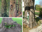 trees-eating-objects.jpg