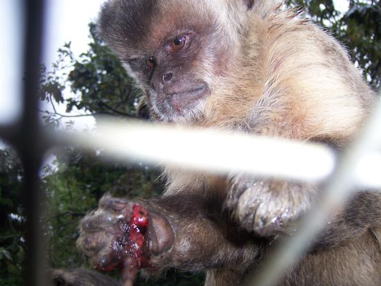 unnecessary animal suffering/cruelty at monkey town south africa