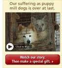 Puppy Mill Suffering Is Over