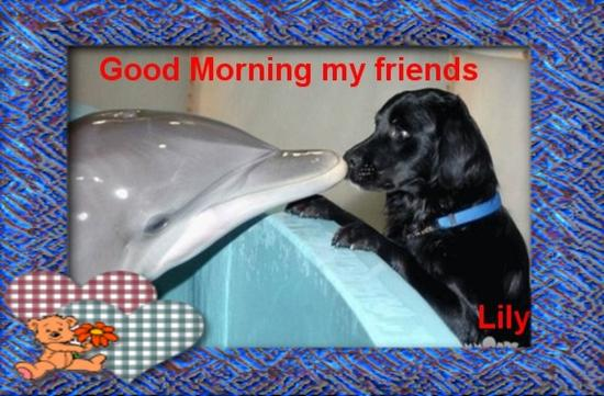 dolphin_and_labrador--edited.jpg