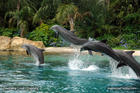 discovery-cove-dolphins-b.jpg