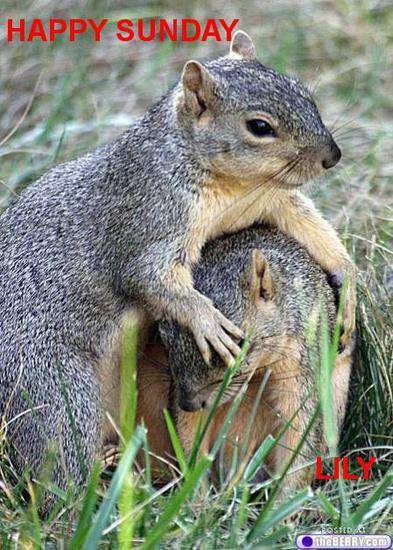 cute_animals_20__squirrels--EDITED.jpg