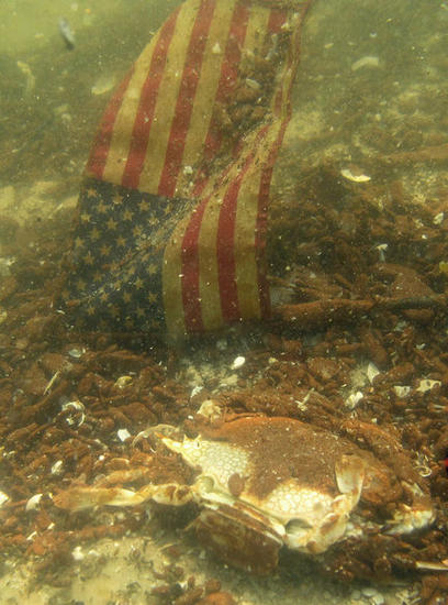 Oil Covered Speckled Crab and American Flag