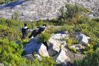 ds_Crows in the morning sun3.jpg