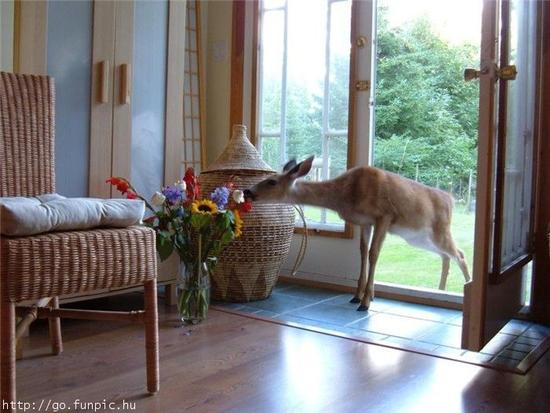 deer in doorway.jpg