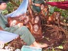 Orphans for the Palm Oil Industry!!!