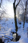 untouched snow and winter sun