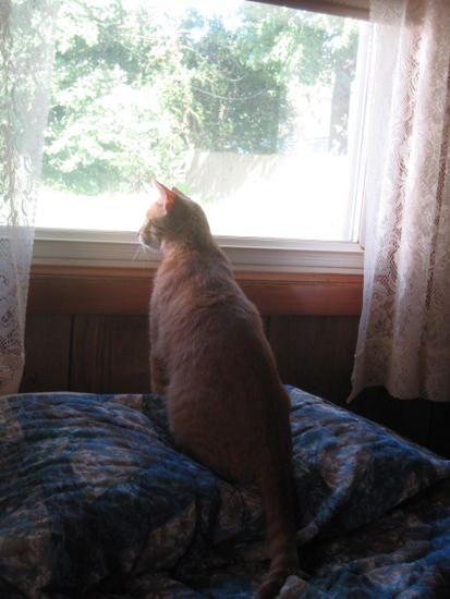 pillow perch
