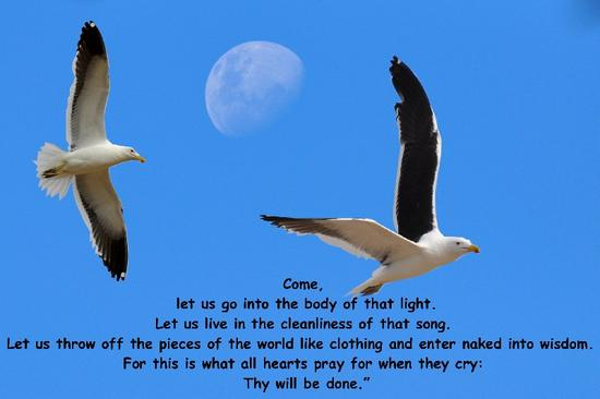 ds_moon today and gulls on poem.jpg