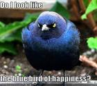 Blue Bird of Happiness?