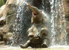 baby elephant in shower.jpg