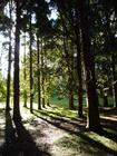 woodlands in Cornwall Park