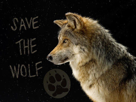 save the wolf paw print.jpg