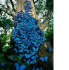 Butterflies for Africa (not IN Africa)