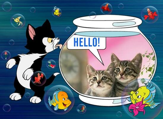 hello cats in bowl.jpg