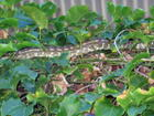 visit from King python