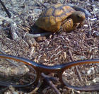 tortoise shell glasses (my wifes glasses)