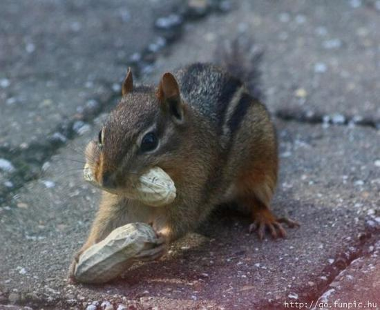 squirrel with nuts.jpg