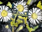 Heath aster flower painting