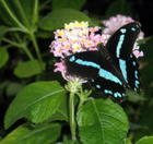 Mike's Butterfly House Pictures 036.JPG