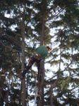 Artemis Tree Surgery