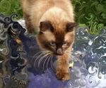 Poldy Cat