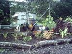 Sage Thyme