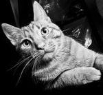 Chairmann Meow