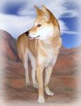 Dann Dingo