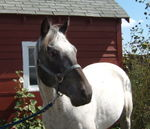 BH Horse Rescue Val Hinderlider