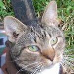 Christopher R Cat