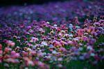 Azure Wildflowers