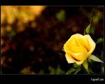 Rose Tamang